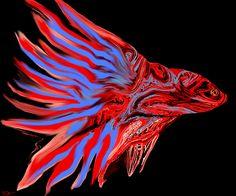 Fiery Red Betta Fish by Abstract Angel Artist Stephen K Alien Artist, Real Genius, Fiery Red, Betta Fish, Lion Sculpture, Angel, Statue, Wall Art, Abstract