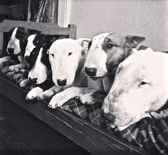 One Bullie Is Not Enough...
