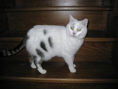 Bella Kat | Pawshake Glabbeek