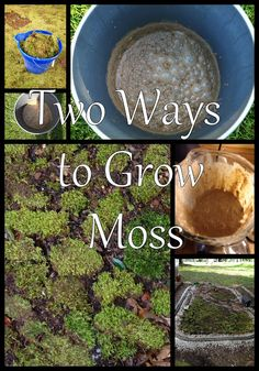 How to grow moss
