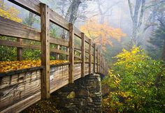 Foot bridge on the Tanawha Trail heading up Rough Ridge near Grandfather Mountain in the fog during the fall foliage. ~Dave Allen photo