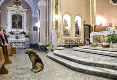 Ciccio, a dog that still waits for her owner who died 2 months ago.
