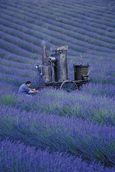 Explore LOccitane en Provence's photos on Flickr. LOccitane en Provence has uploaded 104 photos to Flickr.