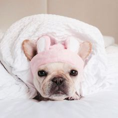 Recipe: Salmon Quinoa Homemade Dog Food - Where's The Frenchie? Korean Beauty Store, Pink Headbands, Homemade Dog Food, Salmon Recipes, Dog Food Recipes, Cute Dogs, French Bulldog, Your Dog, Pup
