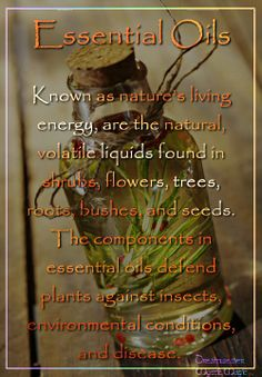 Essential oils, known as nature's living energy, are the natural, volatile liquids found in shrubs, flowers, trees, roots, bushes, and seeds. The components in essential oils defend plants against insects, environmental conditions, and disease.