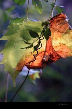 trasparenze d'autunno