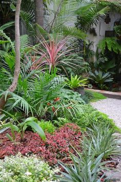 Tropical style garden in France.
