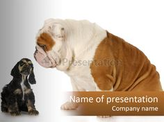 Face english puppy PowerPoint Template
