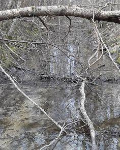 Kraav  #veepäev #kraaviblogi #kraav #watermonitoring  #water #waterday  #veeblogi  #ditch