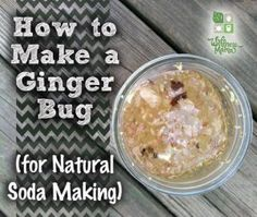 How to Make a Ginger Bug for Natural Soda