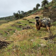 Garajonay National Park, La Gomera, Canary Islands Spain / Unesco Word Heritage List