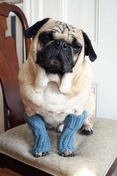 Snuggly Dog Leg Warmers