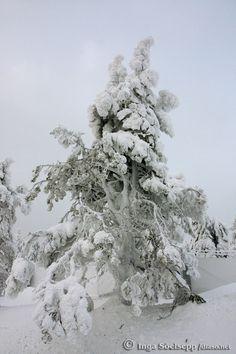 Winter in Ruka, Finland