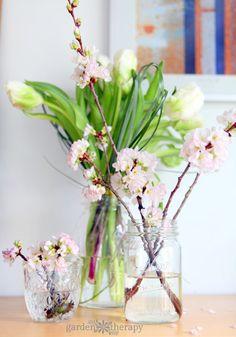 a cheery spring arrangement in glass mason jars - tulips and cherry blossoms Flower Centerpieces, Flower Arrangements, Table Arrangements, Centrepieces, Winter Flowers, Fresh Flowers, Lawn And Garden, Garden Tips, Garden Ideas
