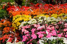 Floral Wreath, Wreaths, Plants, Products, Home Decor, Flower Crowns, Door Wreaths, Flora, Deco Mesh Wreaths