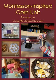 Preschool corn unit - lots of links and ideas. The grain sorting activity is particularly good.