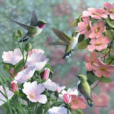 """Garden Visitors"" - Hummingbirds by Bradley Jackson"