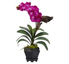Spruce up your interior decor with the lovely Nearly Natural Vanda Orchid Arrangement. This delicate, life-like accent is displayed in a geometric hexagonal vase, nestled on faux moss for added effect, and bursting with beautiful blooms. Orchid Vase, Orchid Plants, Silk Plants, Faux Flowers, Silk Flowers, Silk Orchids, Artificial Orchids, Silk Floral Arrangements, Black Vase