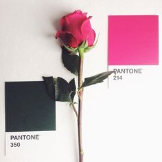Would a rose by any other #color match so perfectly? #Regram from @Elena Kovyrzina Limkina! #colorinspires