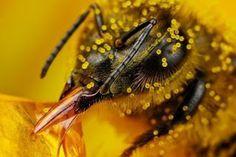 Abejas pequeñas dadoras de vida. Nota informativa en: http://bosquedetlalpan.blogspot.mx/2012/10/abejas-pequenas-dadora-de-vida.html