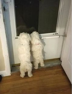 Waiting for daddy to come home ... so cute