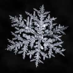 Don Komarechka posted a photo:  I've been craving some of the larger and more elaborate snowflakes, so I dug through the archives and found this beauty that had been sitting for over nine months to be edited. Snowflakes like this take up a lot more time, and this one was worked on across three days when I could find the time. View large!  Complex snowflakes are interesting, because additional complexity tends to break the symmetry, and some of the beauty is lost. At the same time the details…