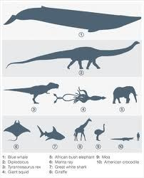 Sizes - amazing facts about nature and animals - Google Search