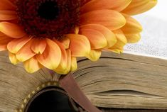 5 Ways to Choose Verses for Bible Journaling Losing A Loved One, Try To Remember, Daily Bible, God Loves You, 5 Ways, Gods Love, Bible Verses, Journaling, Love Of God