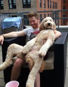 One relaxed dog / Troy Osinoff / Via Twitter: @yo