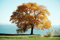 The Best Small Shade Trees