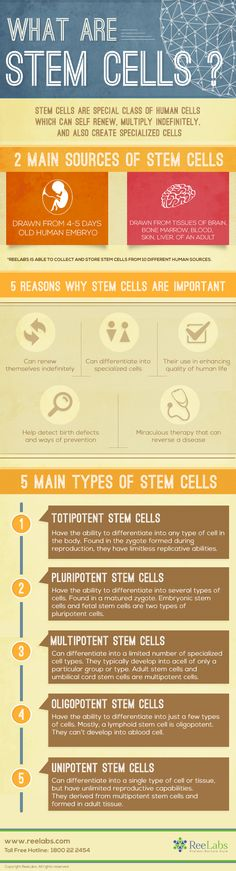 What Are Stem Cells - infographic - Health Teaching Science, Life Science, Science And Nature, Cell Biology, Ap Biology, General Biology, What Is Stem, Stem Cell Research, Cord Blood Banking