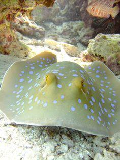 Marine Life- Ras Mohammed , Egypt