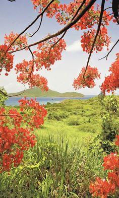 ✯ Tamarind Bay View, Puerto Rico
