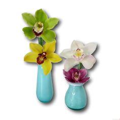 Colourful cymbidium flowers in vase