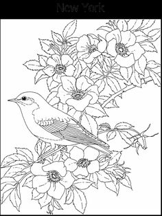 State Flower And Bird Coloring Page