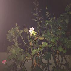 🌸Instagram: Mepnah🌸 Plants, Instagram, Photos, Planters, Plant, Planting