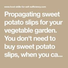 Propagating sweet potato slips for your vegetable garden. You don't need to buy sweet potato slips, when you can start your own at home in the spring from a single potato. Here's how it's done.