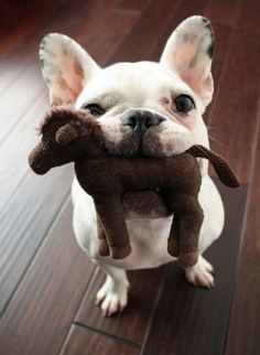 french bulldog toy