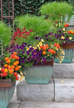 Three Dogs in a Garden: The Summer's Prettiest Container Plantings: The ceramic pots are an attractive mix of minty-green and brunt terra cotta colors. Container Flowers, Flower Planters, Container Plants, Container Gardening, Flower Pots, Beautiful Flowers Garden, Pretty Flowers, Beautiful Gardens, Plant Design