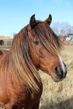 In the Breeze on a Sunny Day Sunny Days, Breeze, Horses, Photos, Animals, Animales, Pictures, Animaux, Horse