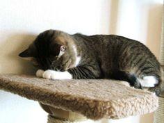 "Cat's ""gomenne"" is so cute."