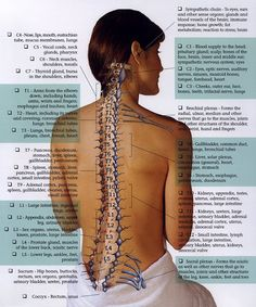 why chiropractic care really works - it's not a hoax #chiropractor #health