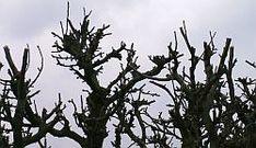 Jabloně - řez Sad, Gardening, Plants, Lawn And Garden, Plant, Planets, Horticulture