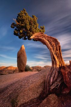 Time Traveler (Joshua Tree, California), photo by Max Vuong.  #joshuatree #california #vacation