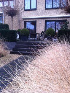 Moderne tuin met pennysetum en taxus hagen.