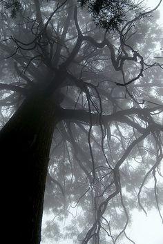 """A huge tree in Lushan"", by Xianyi Shen ( https://www.flickr.com/photos/shenxy/302845967/ )"