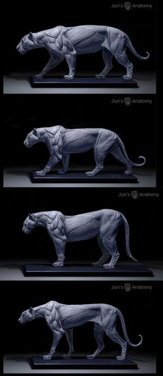 Jun's Anatomy big cat models for art reference - jaguar, cougar, leopard, and cheetah Cat Anatomy, Anatomy Models, Animal Anatomy, Anatomy Drawing, Zbrush Anatomy, Anatomy Art, Anatomy Reference, Art Reference, Animal Sculptures