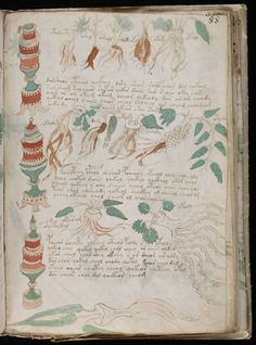The Voynich Manuscript: The Book Nobody Can Read 3