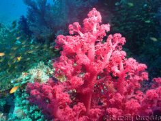Soft Coral & Little Fish Cool Fish, Saltwater Tank, Soft Corals, Little Fish, And So The Adventure Begins, Ocean Life, Under The Sea, Pretty In Pink, Colors