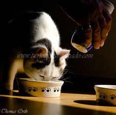 Katzen Emotional Photography, Cats